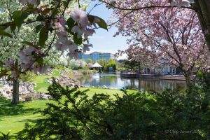 Springtime at Centennial Lakes Park in Edina, Minnesota